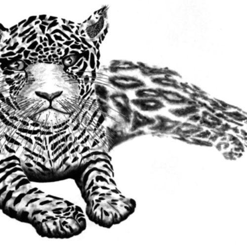 Luipaard Paul R Kock